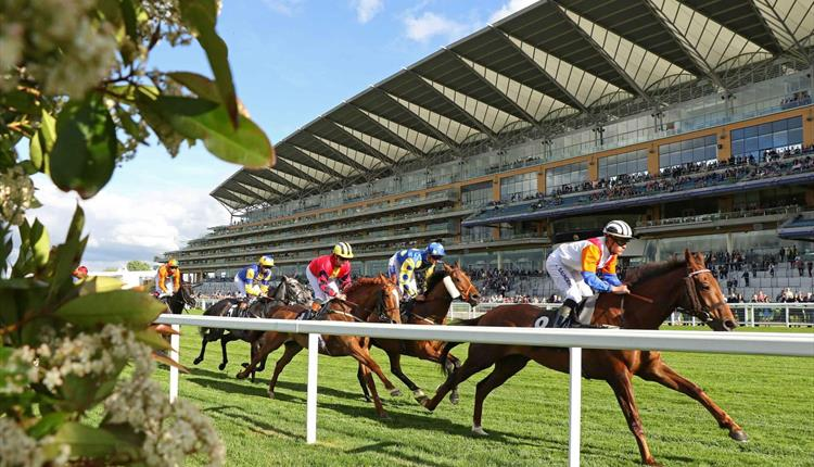 Racing at Ascot 2020: May Racing Weekend