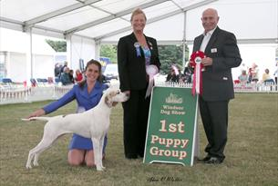 A winner at Windsor Championship Dog Show, Windsor Home Park. Image courtesy Alan Walker